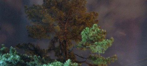 Athens Moon Tree basks in moon glow